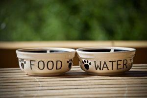 לגזור ולשמור: כללי ניקיון של קערות אוכל לכלבים